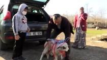 LÖSEMİ HASTASI - Lösemili Küçük Arda'nın 'Kuzu' Hayali Gerçekleşti