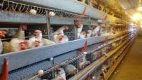 YUMURTA - 300 Tavukla Başladı, Şimdi 7 Bin Tavuğu Var