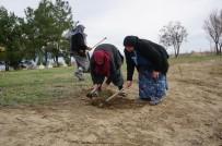 ÇAM AĞACI - Kur'an Kursu Kadın Öğrencileri Mezarlığı Ağaçlandırdı