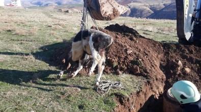 Siirt'te Rögara Düşen İneği İtfaiye Kurtardı