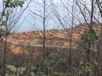 ÇAMBURNU - Yangında Zarar Gören Çamburnu'na 14 Bin Adet Sarıçam Fidanı Dikildi