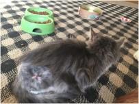 Yaralı Kedi, Hayvan Bakım Evinde Hayata Tutundu