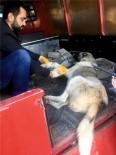 Yaralı Sokak Köpeği Tedavi Edildi