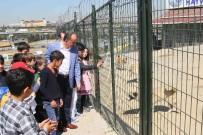 İLAÇ TEDAVİSİ - Bağcılar'da 268 Sokak Hayvanı Sahiplendirildi