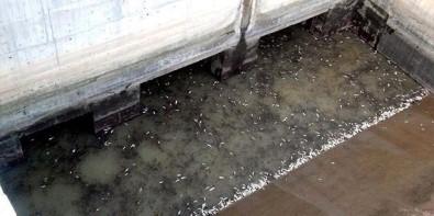 Balık Ölümleriyle İlgili HES'e 24 Bin Lira Ceza