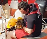 BOĞULMA TEHLİKESİ - Denize Düşen Kedi AKUT'un Operasyonuyla Kurtarıldı