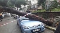 ÇAM AĞACI - Devrilen Ağaç 2 Araçta Hasara Yol Açtı