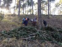 YEŞILÇAY - Gediz Orman Alanlarında Gençleştirme Çalışmaları