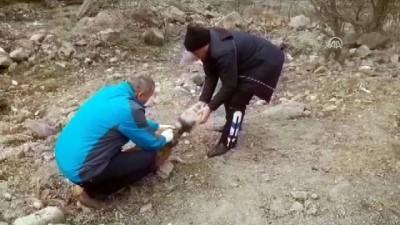 Kafası Bidona Sıkışan Köpek İçin Seferber Oldular
