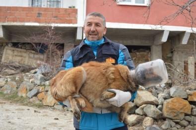 Kafasına Bidon Sıkışan Köpek İçin Operasyon