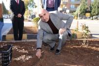 LALE SOĞANI - Kilis'te Lale Soğanı Dikilmeye Devam Ediliyor