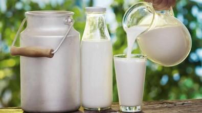 Ordu'da Süt Üretimine Büyükşehir Desteği