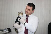 DUBAI - Başbakan Yıldırım'ın Gündemindeki Veteriner Hekim Konuştu