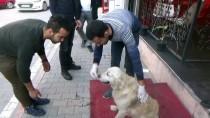 KÖPEK - Esnaf, Yaralı Köpek İçin Seferber Oldu