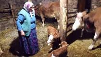 SEVINDIK - Üçüz Doğuran 'Yaşmaklı' Sahibini Sevindirdi