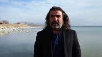ERÇEK GÖLÜ - Van Gölü Kuğu Ve Flamingoları Ağırlıyor