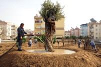 SERDENGEÇTI - Anadolu Bahçesi'ne 60 Yeni Ağaç