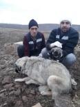 KÖPEK - Bingöl'de Anne Köpek Ve Yavrusu Koruma Altına Alındı
