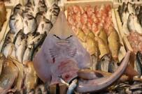 KÖPEK - Bu balığı görenler şaşırıp kalıyor