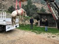 İŞ MAKİNESİ - Dereye Düşen Sahipsiz Atı İtfaiye Kurtardı