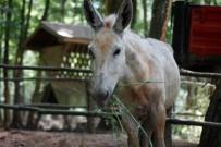 DOĞAL YAŞAM PARKI - Doğal Yaşam Parkı, Dağal Hayata Hazırlanıyor