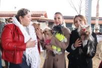 KÖPEK - Köpek Irkları Yarışması İkinci Gününde