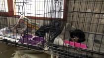 FEVZI UZUN - Tedavi Ettiği Kedilere Mozart Dinletiyor