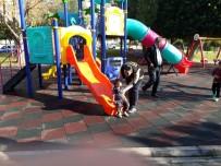 UYUŞTURUCUYLA MÜCADELE - Parklarda 'Torbacı' Avı