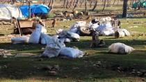 MÜLTECI - Halep Ve İdlib'den 300 Bin Mülteci Göç Etti