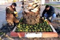 ENIS SÜLÜN - Marmaraereğlisi Caddelerinde Çiçek Açacak