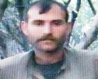 PKK'nın Sözde Bölge Komutanı Yakalandı