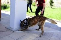 NARKOTIK - Uşak'ta Narkotik Detektör Köpekler Uyuşturucuya Göz Açtırmıyor