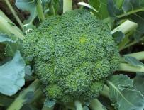 SINGAPUR - Brokoli kanser tedavisinde kullanılabilir