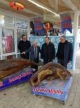MEHMET ÖZEL - Büyükçekmece Kaymakamı Özel, Deniz Canlıları Müzesi'ni Gezdi