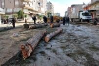 KURUDERE - Salihli'de Çürüme Nedeniyle Tehlike Oluşturan Ağaçlar Kesildi