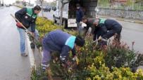 YıLDıZLı - Başiskele'de Yollar Bitkilendiriliyor