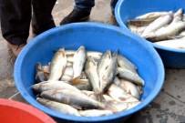 ABDULLAH DEMIR - Botan Balığına Rağbet