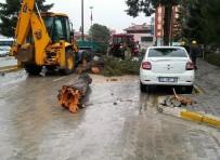 ÇAM AĞACI - Denizli'de Fırtına Çam Ağacını Yıktı