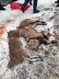 DAĞ KEÇİSİ - Koruma Altındaki Keçileri Vurdular, Suçüstü Yakalandılar
