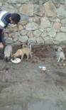 YAVRU KÖPEKLER - Okul Harçlığını Sokak Hayvanlarına Mama Almak İçin Biriktiriyor