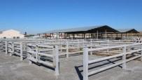 Sungurlu'da Hayvan Pazarı Kapatıldı