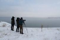 FEN FAKÜLTESİ - Van'da 'Kış Ortası Su Kuşu Sayımı' Başladı