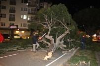 ŞİDDETLİ RÜZGAR - Antalya'da Şiddetli Rüzgar Ağaçları Kökünden Söktü