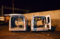 FAILI MEÇHUL - Diyarbakır'da Hayvan Hırsızları Yakalandı
