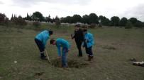 CENGIZ ERGÜN - Köprübaşı Mezarlığı Ağaçlandırılıyor