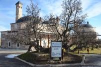 DIYABET - 850 Yaşındaki Karadut Ağacı Hala Meyve Vermeye Devam Ediyor