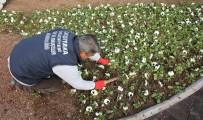 BADEMLER KÖYÜ - Bademler'in Çiçeği Karşıyaka'da Açıyor