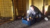 YAVRU KÖPEKLER - Başkan Tutal, Yavru Köpekleri Sütle Besledi