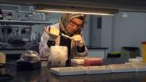 KÖK HÜCRE - 'Biobank' Türkiye'nin 'gen hafızası'nı oluşturacak