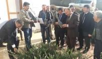 MUHITTIN GÜREL - Yangında Zarar Gören Üreticilere Zeytin Fidanı Dağıtıldı
